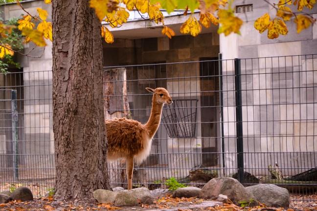 Dierentuin Berlijn - Zoologischer Garten-12