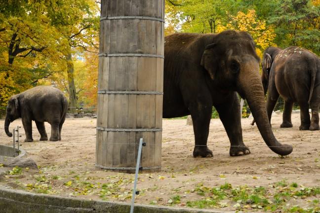Dierentuin Berlijn - Zoologischer Garten-3