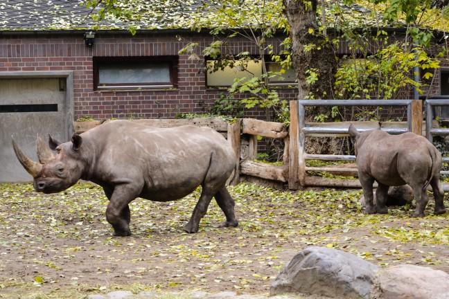 Dierentuin Berlijn - Zoologischer Garten-36