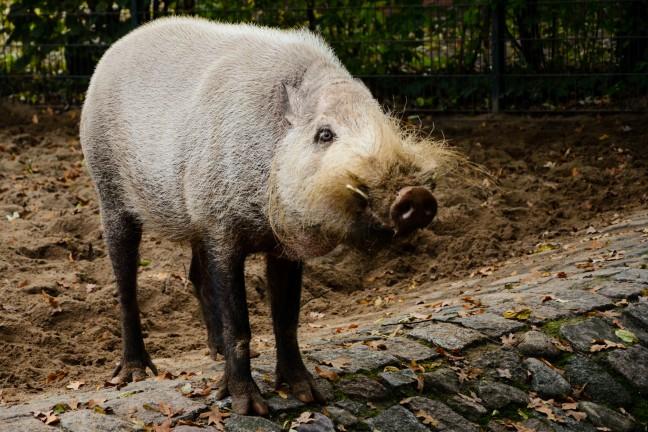Dierentuin Berlijn - Zoologischer Garten-78