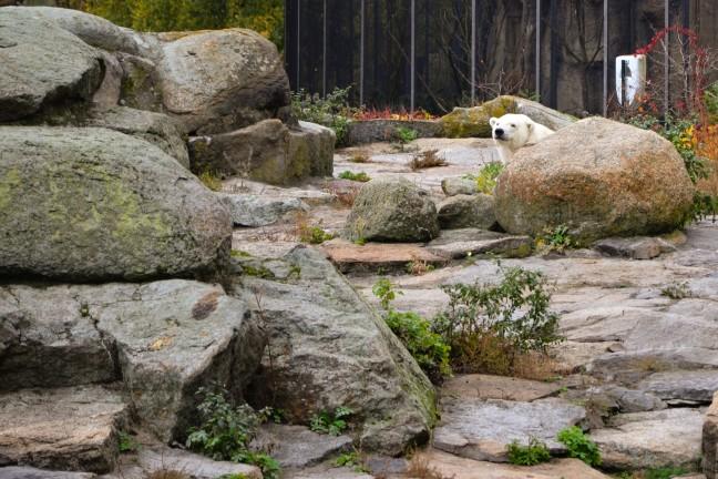 Dierentuin Berlijn - Zoologischer Garten-83