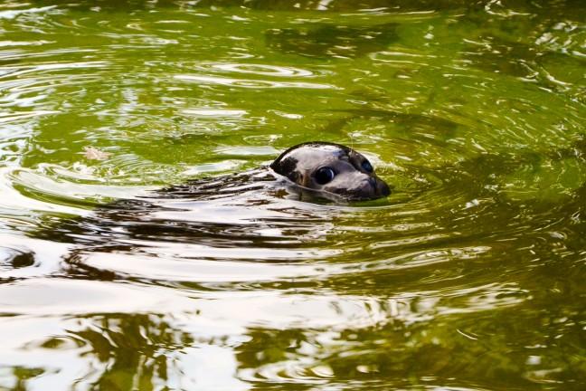 Dierentuin Berlijn - Zoologischer Garten-96