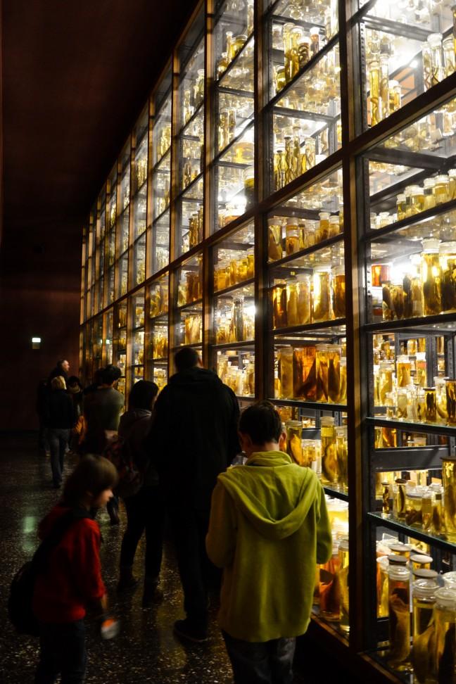 2016-02_01_2016_Naturkundemuseum-Berlijn-54