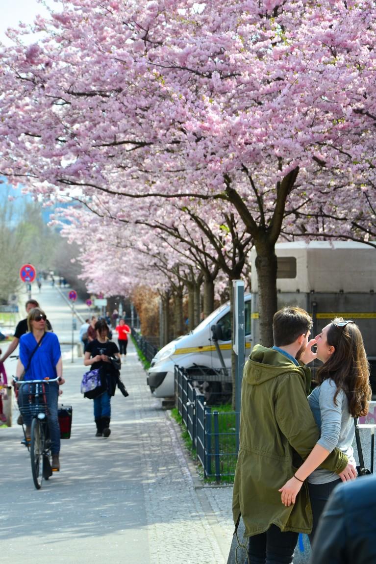 2015-Sakura bloesem Berlijn-12