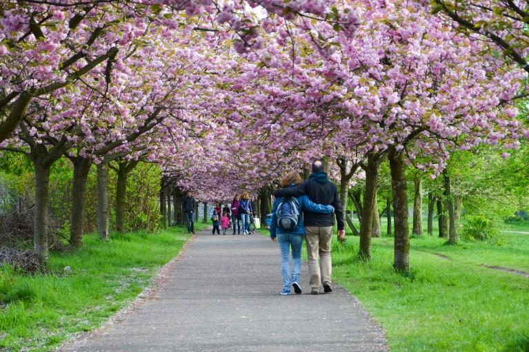 2015-Sakura bloesem Berlijn-26