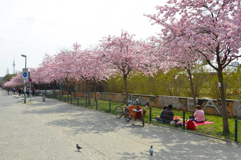 2015-Sakura bloesem Berlijn-4