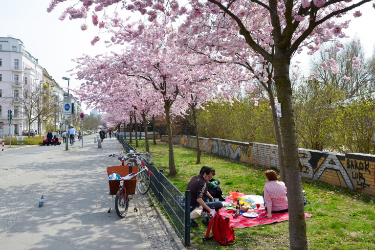 2015-Sakura bloesem Berlijn-6